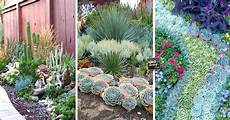 giardini piante grasse per esterno un giardino di piante grasse 20 esempi stupendi da cui