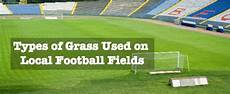 types of grass used local football fields