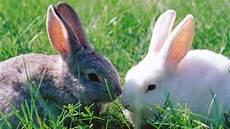 wo bekomme ich ein kaninchen