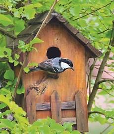 nichoir quel nichoir pour quel oiseau le d ici