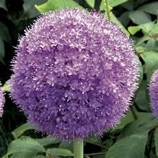 Seara Plantas Flores Plantas De Corte