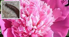Der Schneckenreport Pflanzen Die Schnecken Nicht M 246