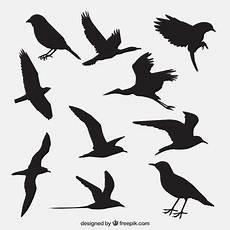raubvogel silhouette ausdrucken