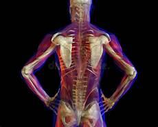 dolore alla gabbia toracica schiena parte posteriore dello scheletro illustrazione di stock
