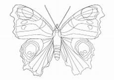 malvorlagen insekten schmetterlinge k 228 fer lustige