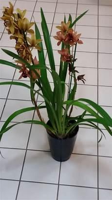 wie oft orchideen gießen wie hei 223 en diese pflanzen und wie oft m 252 ssen sie gegossen
