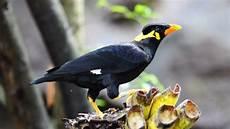 50 Jenis Burung Langka Dan Unik Dilengkapi Dengan Gambar