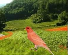 contrario di vanitoso bisbigli come animare un uccello parte prima