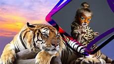 Best Gambar Harimau Hitam Goodgambar