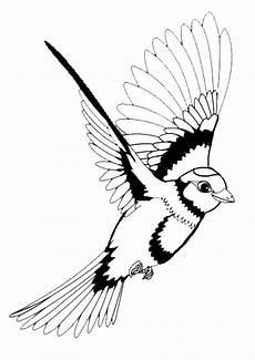 Vogel Malvorlagen Pdf Vogel Malvorlagen Vogel Malvorlagen Kostenlos Druckbare