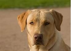 hund in wohnung hund in der wohnung halten hunde zone hunde ratgeber