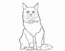 Ausmalbilder Siamkatze Kostenlose Malvorlage Katzen Katzenrassen Coon Zum