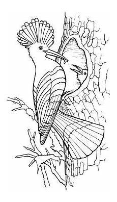 Vogel Malvorlagen Instagram Eulen Ausmalbilder Mit Bildern Ausmalbilder