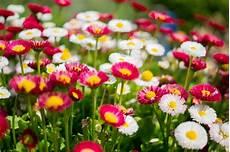sfondo a fiori immagini di fiori 47 foto sfondi hd bonkaday