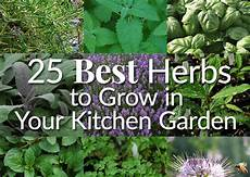Kitchen Garden Definition by 25 Best Herbs To Grow In Your Kitchen Garden The Herb