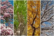 Ausmalbilder Herbst Und Winter Rhythmus Der Jahreszeiten Baeume In Fr 252 Hling Sommer