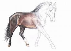 Ausmalbilder Pferde Hannoveraner 17 Best Images About Arts Horses On Montana
