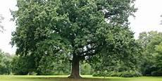 Kenangan Di Bawah Pohon Rindang Co Id