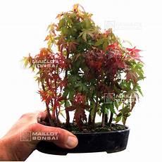 Bonsai Japonais Du Japon Et Des Fleurs