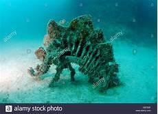 Unterwasser Tiere Malvorlagen Englisch Dinosaurier Skulptur Zum Ersten In Der Welt Unterwasser