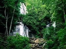 Pictures Foto Gambar Hutan Yang Indah