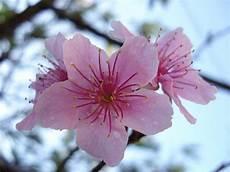 sfondi fiore il fiore scienza facile