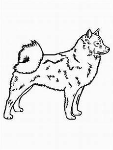 malvorlagen hunde gratis finnischer spitzhund ausmalbild malvorlage hunde