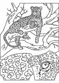 malvorlagen tiere gepard zum drucken in ausmalbilder zum