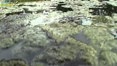 Algen Im Gartenteich - entstehung und vermeidung algen im gartenteich
