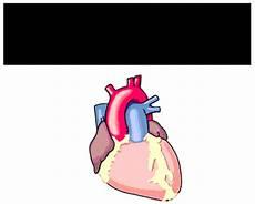 Psik 2b Best Of The Best Sayangilah Jantung Anda