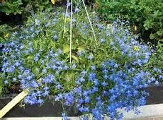 fiori perenni da vaso tra fiori e piante