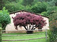 arbre décoratif extérieur 29450 arbre d 233 coratif ext 233 rieur maison fran 231 ois fabie