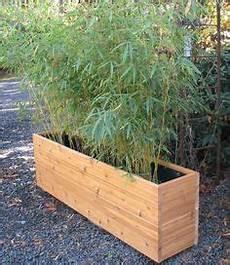 gras für garten bambus als sichtschutz im garten oder auf dem balkon