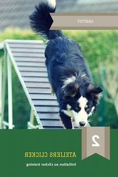 comment dresser un chien gratuit meilleur prix dresser chien recherche stupefiant