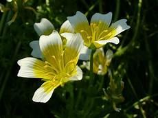 beautiful beautiful flowers