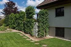 Büsche Pflanzen Sichtschutz - sichtschutzwand windschutz sichtschutz f 252 r