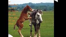Schöne Pferde Bilder - kurzer mit pferdebildern und zitaten