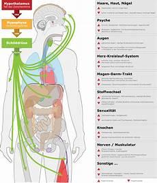 schilddrüse symptome test symptome haarausfall m 252 digkeit gewichtsverlust