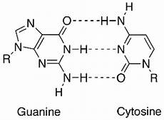 why there are three hydrogen bond between cytosine and guanine in dna quora