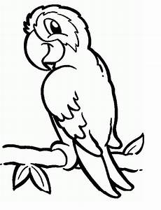 parrots coloring pages to and print for free