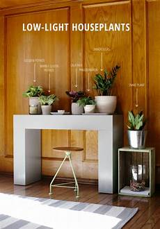 6 low light houseplants to grow this spring the tao of dana