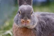 Wie Alt Werden Kaninchen Haustier Und Wildkaninchen