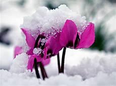 der ziergarten im winter naturagart park aktuell