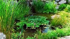 essig gegen moos essig gegen algen gk kreativ gewusst wie moos entfernen