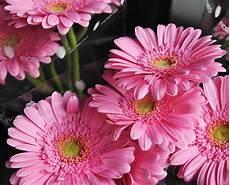 prezzo fiori fiori recisi e al mazzo fiorito