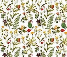 Flower Illustration Wallpaper by Vintage Botanical Wildflowers Small Wallpaper
