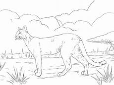 florida panther coloring page supercoloring