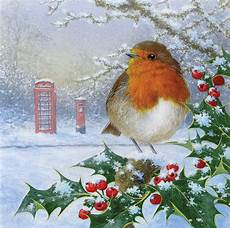 merry christmas robin pictures christmas is coming oak tree homes trust