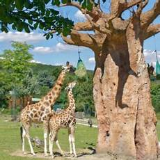 Kindergeburtstag Im Opel Zoo In Kronberg Mamilade