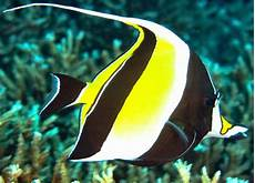 100 Gambar Dp Bbm Ikan Hias Cantik Lucu Dan Keren